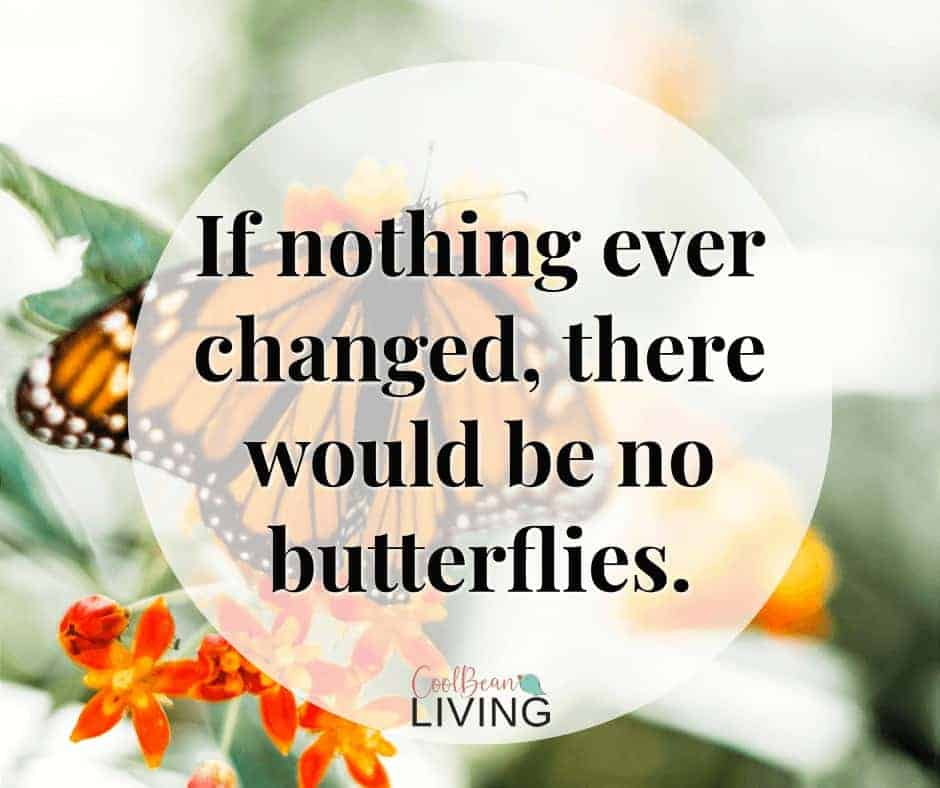 If nothing ever changed, there would be no butterflies