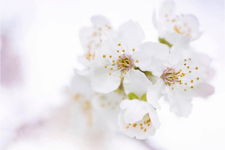 Ways to Blossom in Midlife