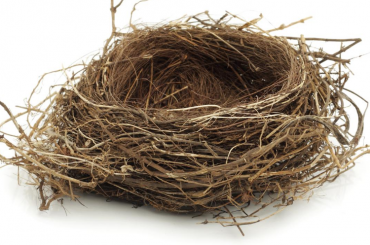 new empty nest